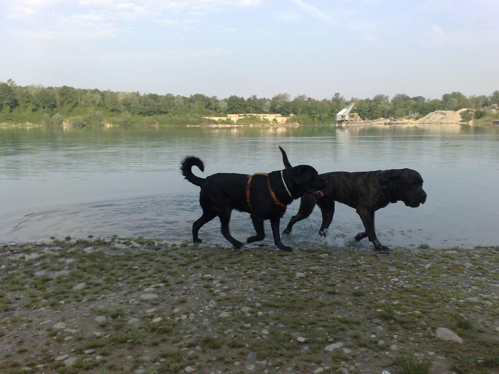 Anton und Tyson am Baggersee
