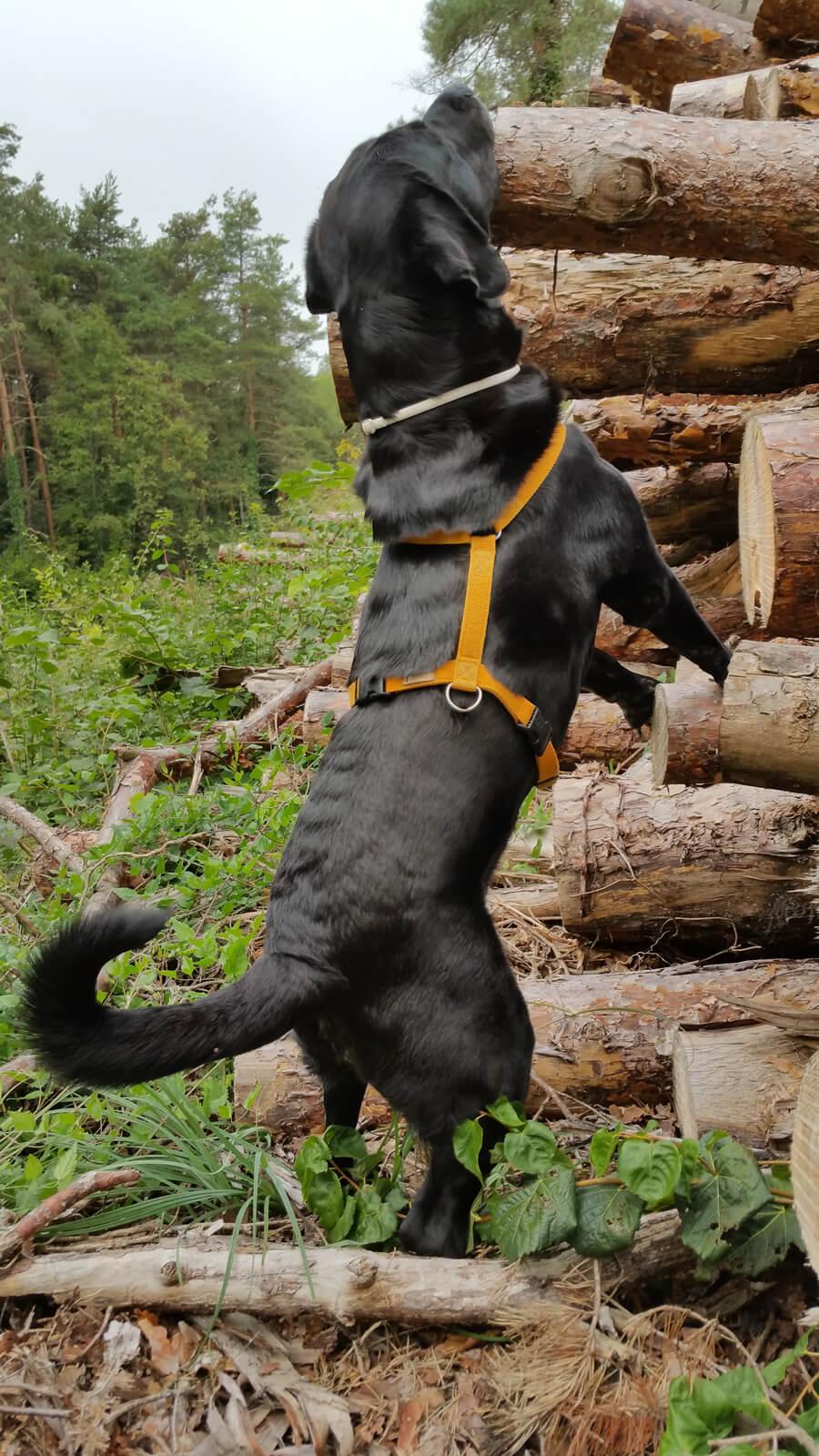 Anton macht Stretching Übungen am Holzstapel.